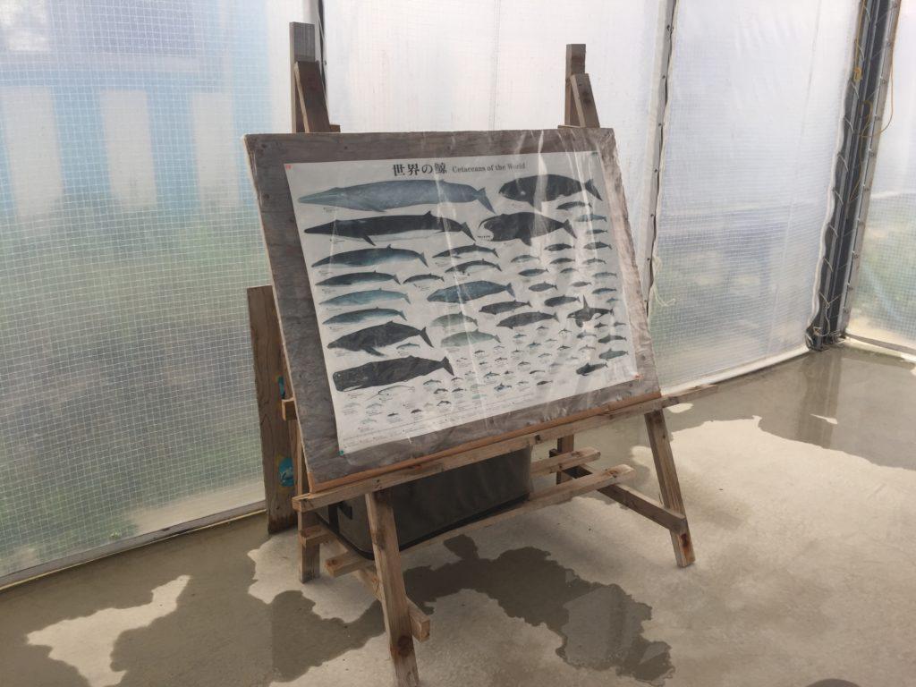ドルフィンファンタジー石垣島‐イルカ達の生態