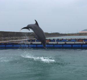 ドルフィンファンタジー石垣島‐イルカ